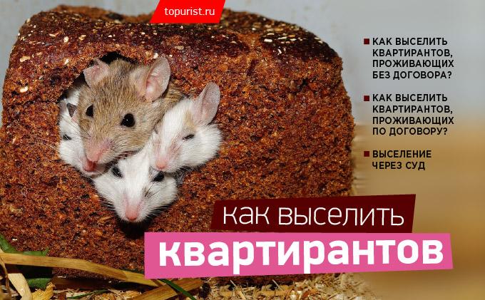 Изображение - Выселение квартирантов, арендаторов 97_kak_vyselit_kvartirantov